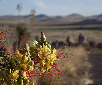 Photograph - Desert Flowers by Amber Kresge