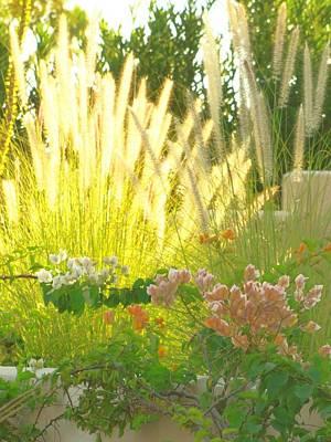 Photograph - Desert Flowers In Morning Sunlight by Lisa Dunn