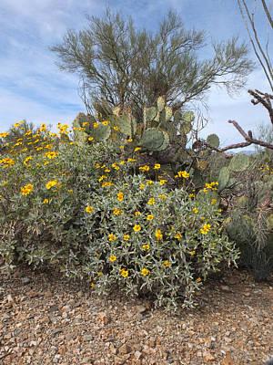 Photograph - Desert Flowers by Michael McGowan