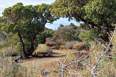 Photograph - Desert Garden Trail by Glenn McCarthy