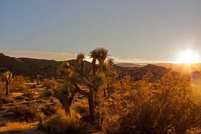 Photograph - Desert Glamor by Kunal Mehra