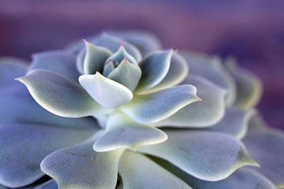 Purple Photograph - Desert Glow by Nancy Ingersoll