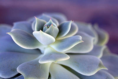 Photograph - Desert Glow by Nancy Ingersoll