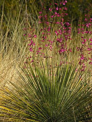 Photograph - Desert Grass Flowers by Robert Lozen