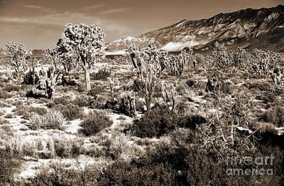 Photograph - Desert Landing by John Rizzuto