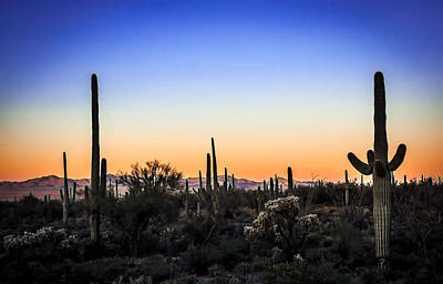 Photograph - Desert Landscape by Barbara Manis