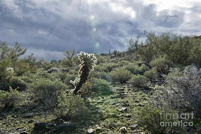 Photograph - Desert Landscape by David Arment