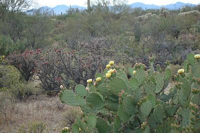 Photograph - Desert Landscape by Susan Woodward