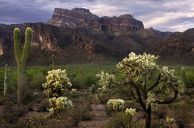 Photograph - Desert Mountains And Cactus by Dave Dilli