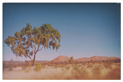 Photograph - Eucalyptus At The Mcdonald Ranges by Ross Carroll