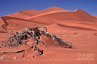 Landscape Photograph - Desert Plant by Liz Leyden
