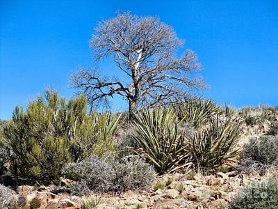Photograph - Desert Plants by Audrey Van Tassell