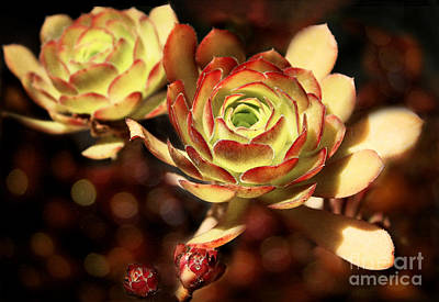 Photograph - Desert Roses by Ellen Cotton