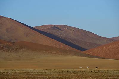Photograph - Desert Running by Tony Beck