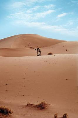 Moroccan Photograph - Desert Sand Dune And Camel by Jon Wilson
