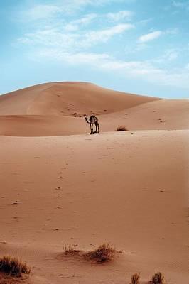 Sahara Photograph - Desert Sand Dune And Camel by Jon Wilson