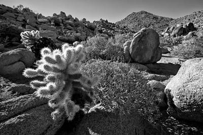 Featured Images Photograph - Desert Scene by Peter Tellone