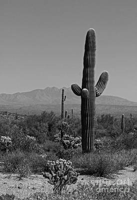 Desert Scenic Iv - Black And White Art Print by Suzanne Gaff