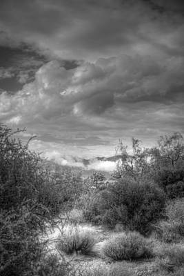 Photograph - Desert Scrub by Robert Melvin