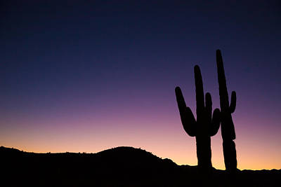 Photograph - Desert Sentinels by Brad Brizek