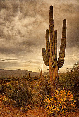 Photograph - Desert Sentinels by Leda Robertson