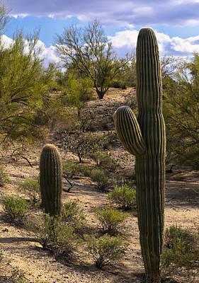 Photograph - Desert Sentinels by Mark Myhaver