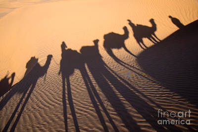 Camel Wall Art - Photograph - Desert Shadows by Delphimages Photo Creations
