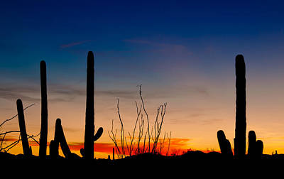 Photograph - Desert Sky by Barbara Manis