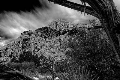 Art Print featuring the photograph Desert Slendor by Chris McKenna