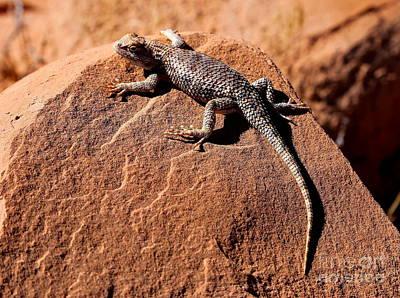 Desert Spiny Lizard Art Print by Marty Fancy