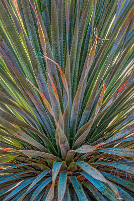 Art Print featuring the photograph Desert Spoon by Beverly Parks