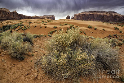 Photograph - Desert Storm by Stuart Gordon