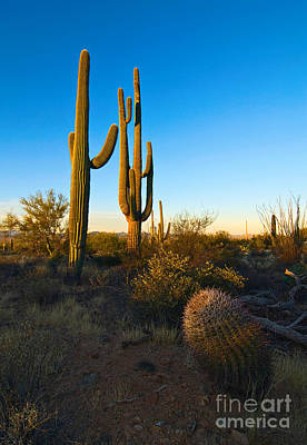 Barrel Cactus Photograph - Desert Sunrise - Saguaro Cactus Sunrise At Saguaro National Park In Arizona by Jamie Pham