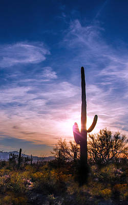 Photograph - Desert Sunset by Barbara Manis