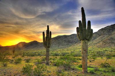 Desert Sunset Art Print by Dan Myers
