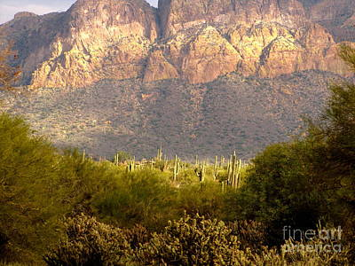 Marilyn Photograph - Desert Sunset Glow by Marilyn Smith