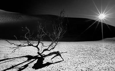 Photograph - Desert Sunset by Julian Cook