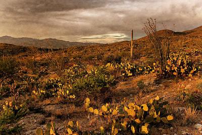Photograph - Desert Sunset by Leda Robertson