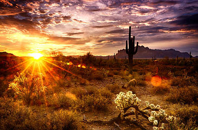 Desert Sunshine  Art Print