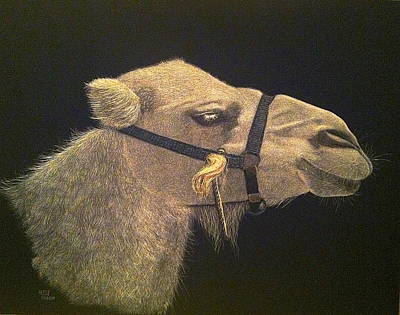 Camel Mixed Media - Desert Taxi by Betsy Frahm