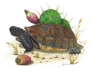 Painting - Desert Tortoise by Cindy Hitchcock