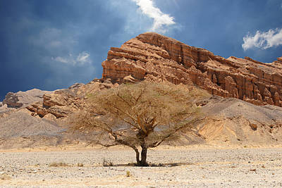 Desert Tree And Mountains Art Print