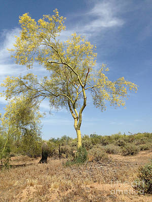 Photograph - Desert Tree by Janice Sakry