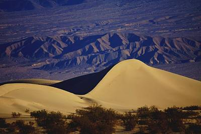 Photograph - Desert Wave by Michael Courtney