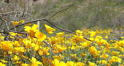 Photograph - Desert Wild Flowers by Broderick Delaney
