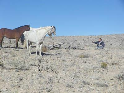 Photograph - Desert Wild Horses 1 by Jonathan Barnes