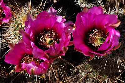 Art Print featuring the photograph Desert Wildflower by Diane Lent