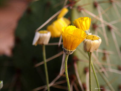 Photograph - Desert Wildflowers by Dick Botkin