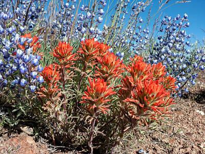 Gerlach Photograph - Desert Wildflowers by Kathleen Bishop