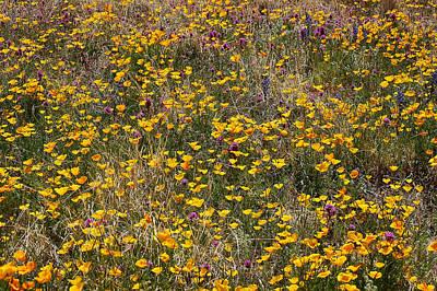 Desert Wildflowers Art Print by Robert Ashbaugh